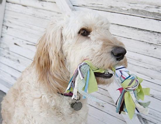 brinquedo-para-cachorro-5