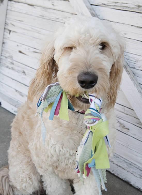 Osso de tecido com o cachorro