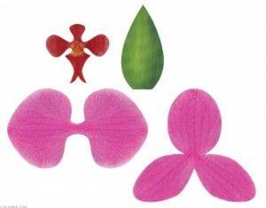 Molde para flor de orquídea