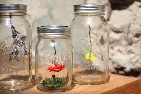 Decoração com florezinhas e potes de vidro para o jardim da casa