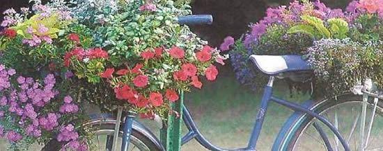 Bicicleta com plantinhas