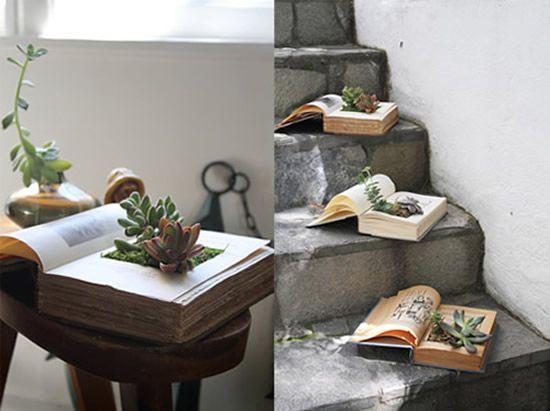 Plantinhas dentro do livro