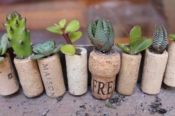 mini jardim de suculentas passo a passo : mini jardim de suculentas passo a passo:Como plantar suculentas em rolhas passo a passo