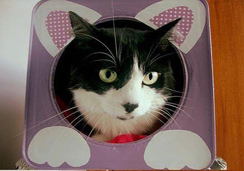 Casinha de gato com latão de tinta