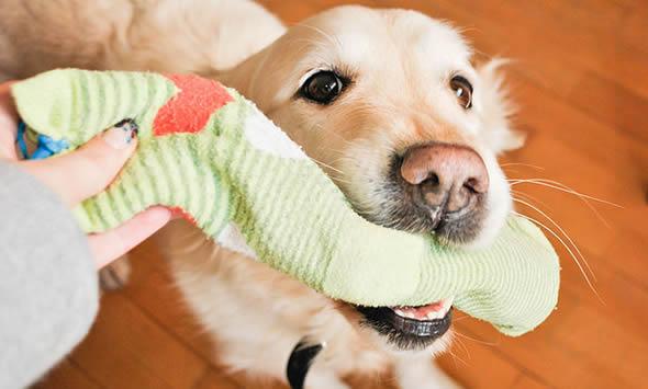 Como fazer um brinquedo para o seu cachorro
