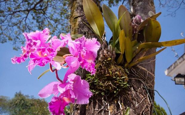 Dicas de como plantar orquídeas