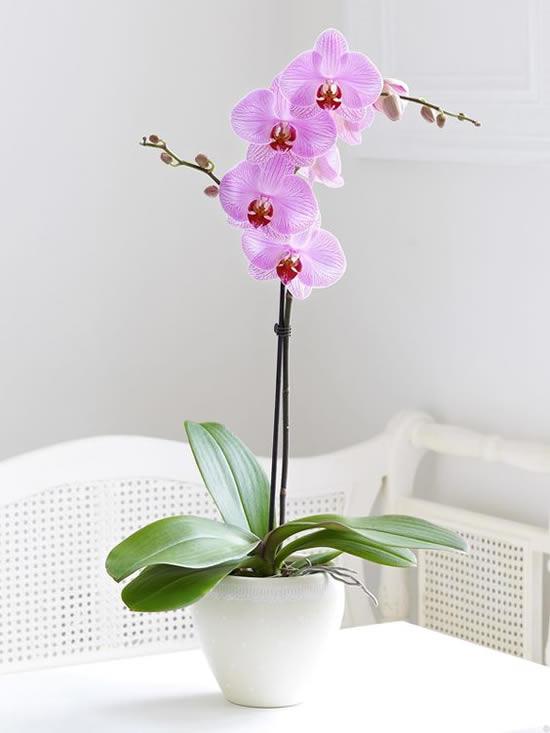 Orquídeas Lindas em Vasos