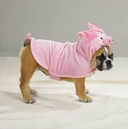 Fantasias para Cachorro