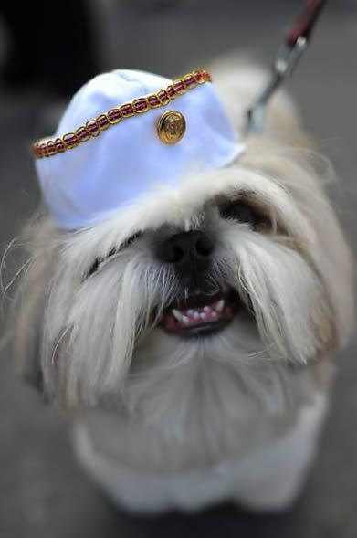 fantasias-para-cachorro-72