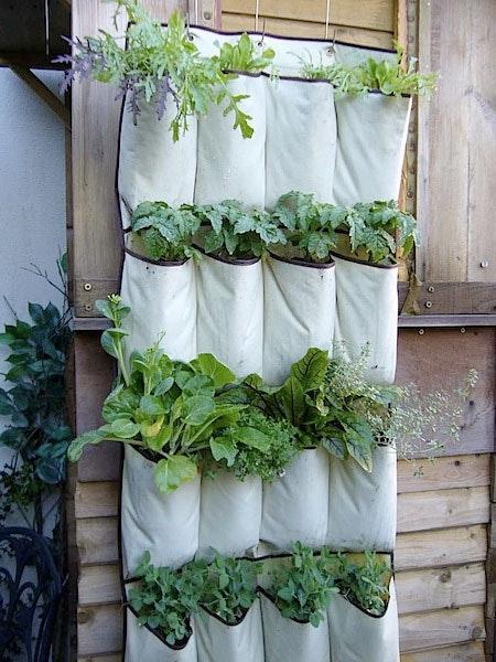 porta ervas com sapateiro velho jardinagem