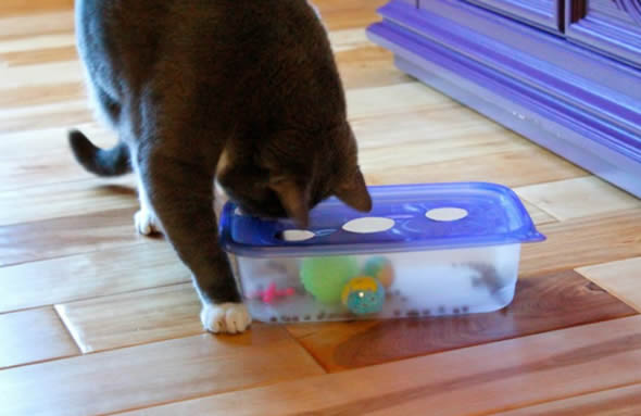 Como Fazer Brinquedos para Gatos - 10 Ideias Divertidas