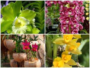 Lindas Flores Orquídeas no Jardim