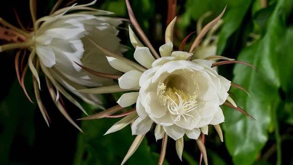 10 Flores Lindas, Raras e Exóticas