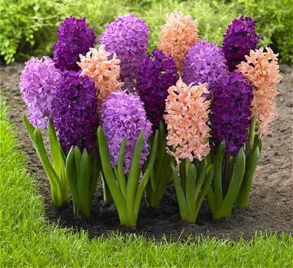 10 Flores Lindas Raras E Exóticas Como Fazer Em Casa