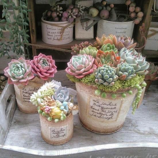 Lindas Plantas Suculentas no Jardim