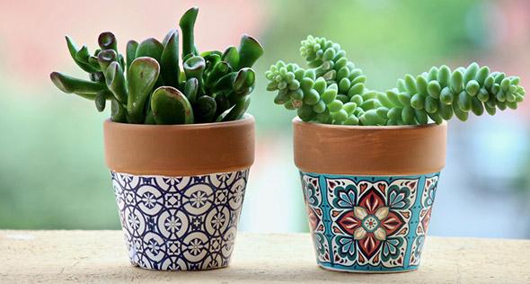 suculentas em vasos de cerâmica