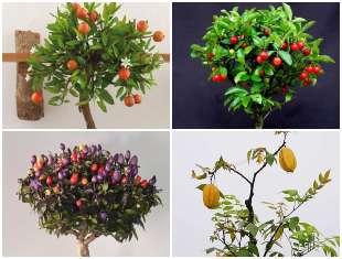 12 Exemplos para Bonsai de Frutíferas