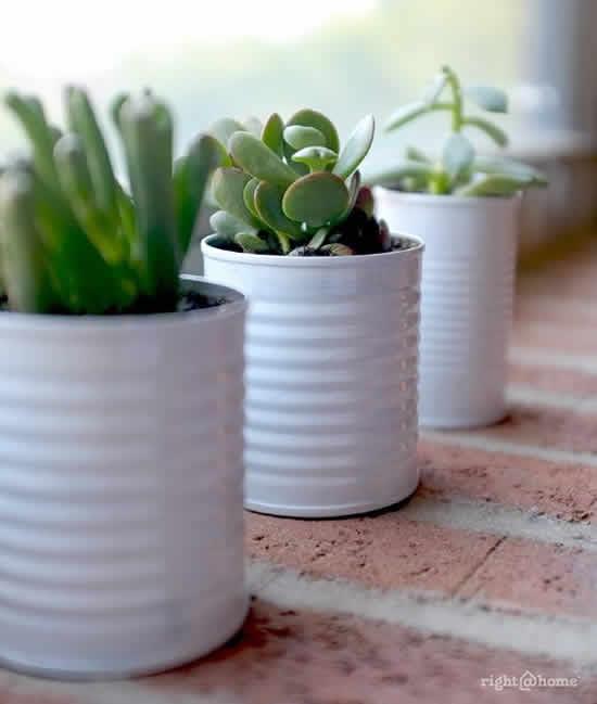 Como plantar Mini Suculentas em Latas