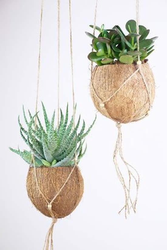 Plante Suculentas em Cocos