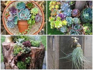 Plantas Suculentas para Decoração de Jardim