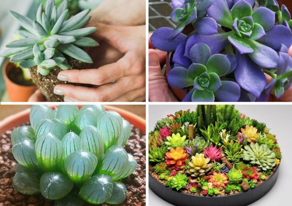 Como plantar suculentas – 15 ideias
