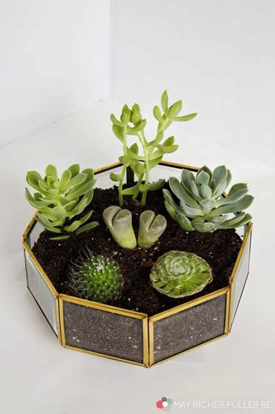 Plantas Suculentas para Decoração da Casa