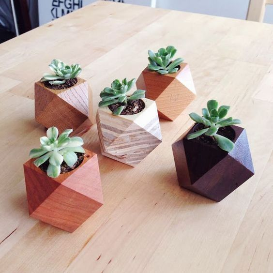 suculentas em vasos de madeira