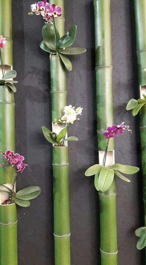 orquídeas em bambu