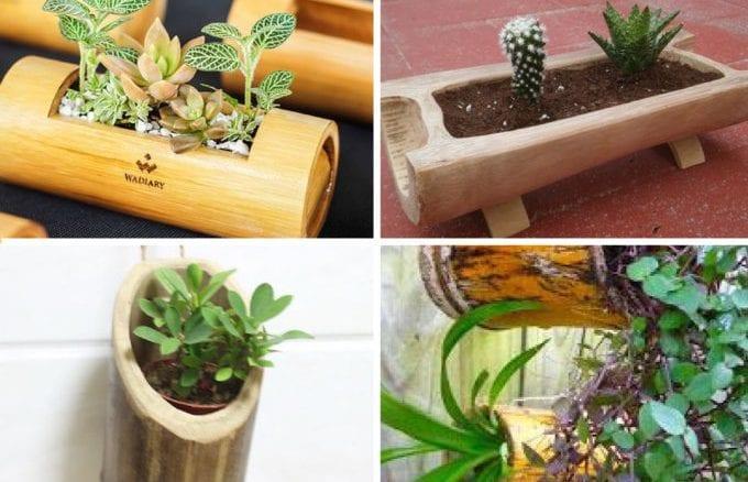 como plantar suculentas em vasos de bambu (6)