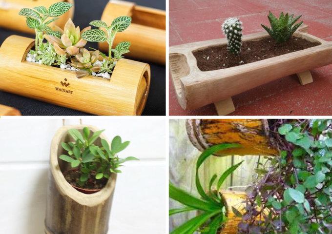 como pantar suculentas em vasos de bambu