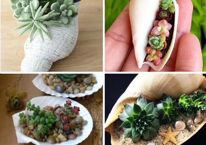como plantar suculentas em conchas