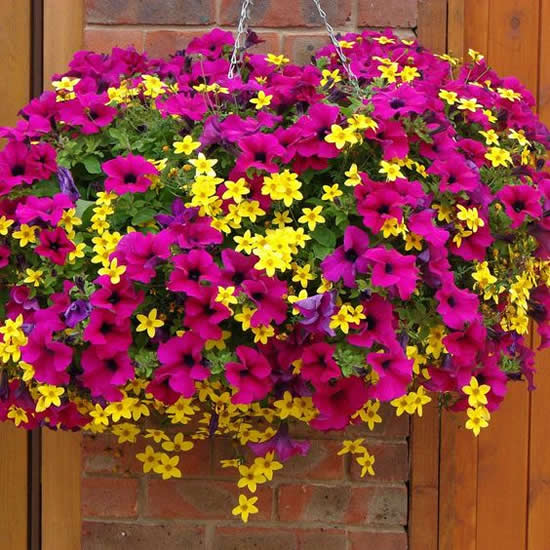 Linda decoração com flores para jardim