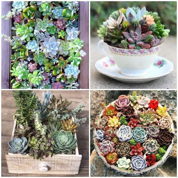 Arranjos com mini suculentas lindos e criativos
