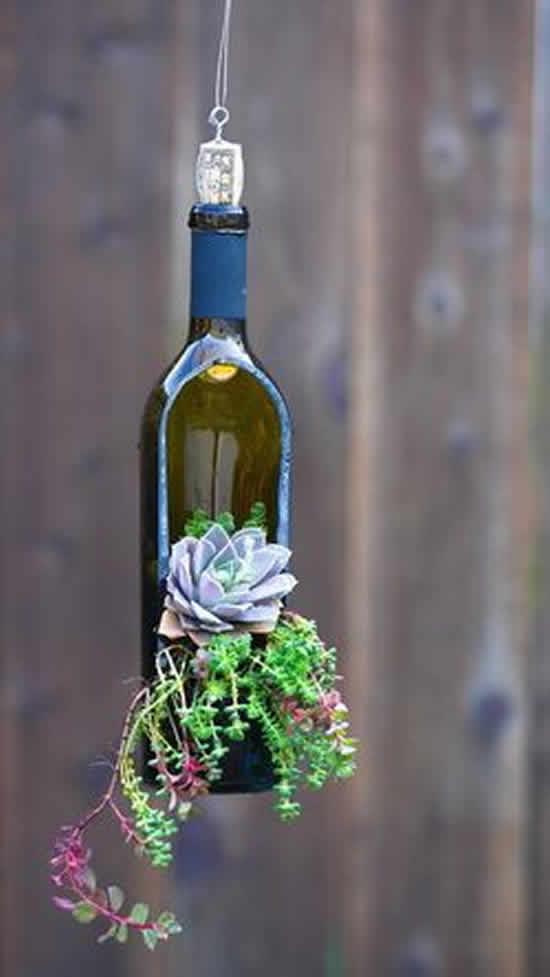 Reutiliza garrafas para plantar suculentas