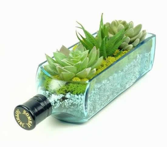 Plante suculentas em garrafas velhas