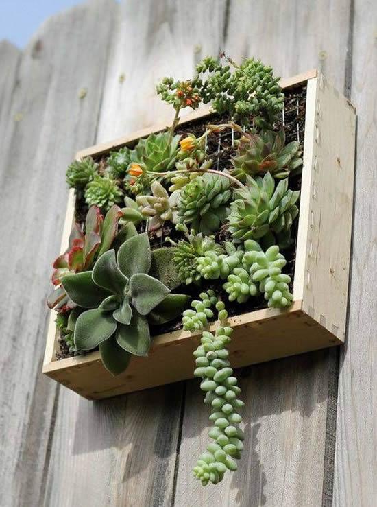 Plante lindas suculentas em pallets