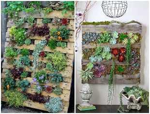 Plante suculentas em pallets para decoração