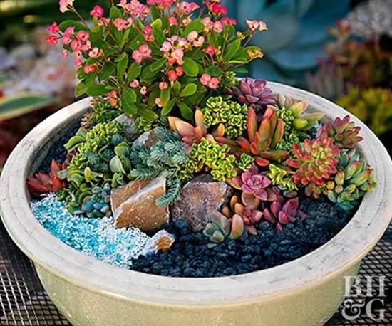 Decoração e mini jardim com suculentas