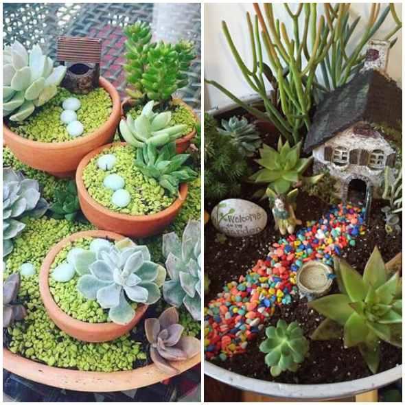 Mini jardim com suculentas