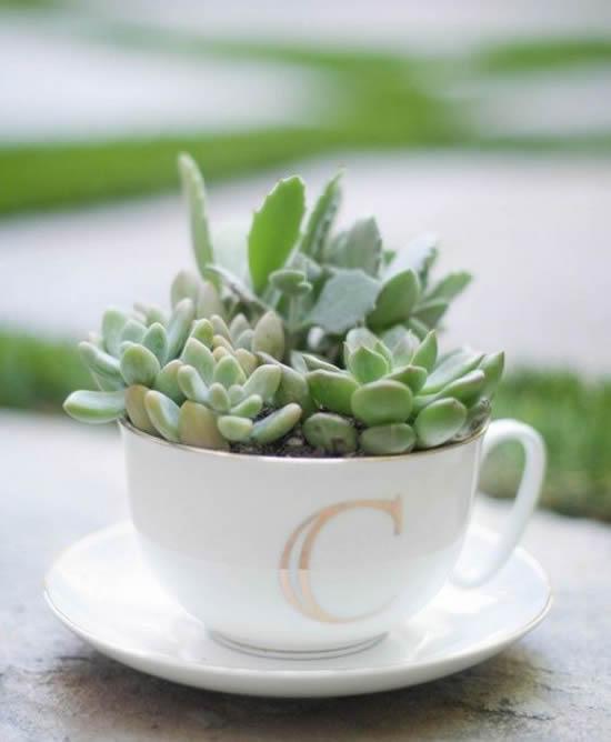 Mini suculentas em xícaras