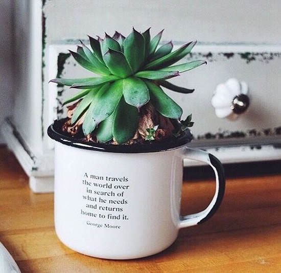 Dicas para plantar mini suculentas em xícaras