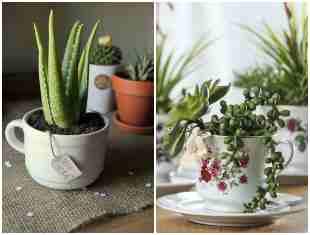 12 ideias lindas de mini suculentas em xícaras