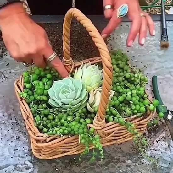 Suculentas plantadas de forma criativa