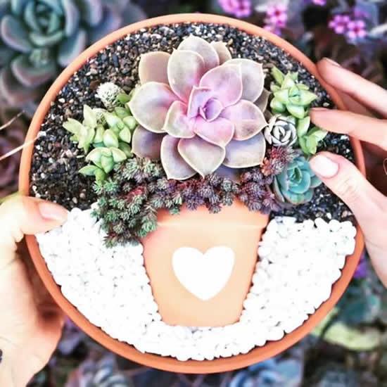 Plante suculentas de forma criativa