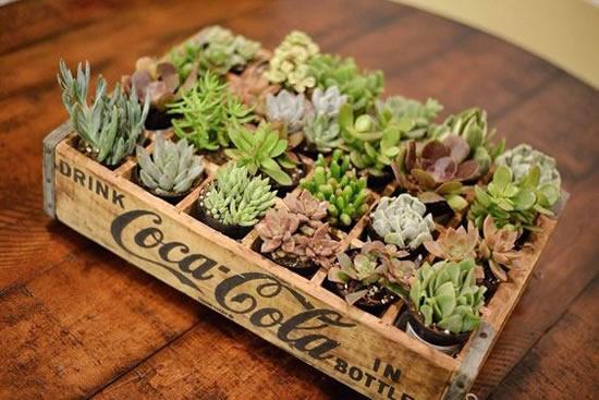 Lindo mini jardim de suculentas em caixote de madeira