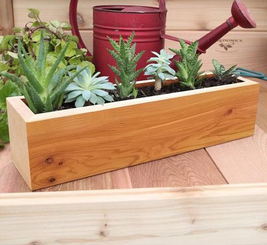 Arranjo de suculentas em caixotes de madeira