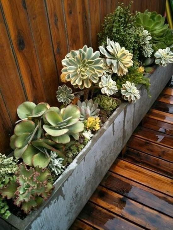 Suculentas plantadas em caixotes de madeira