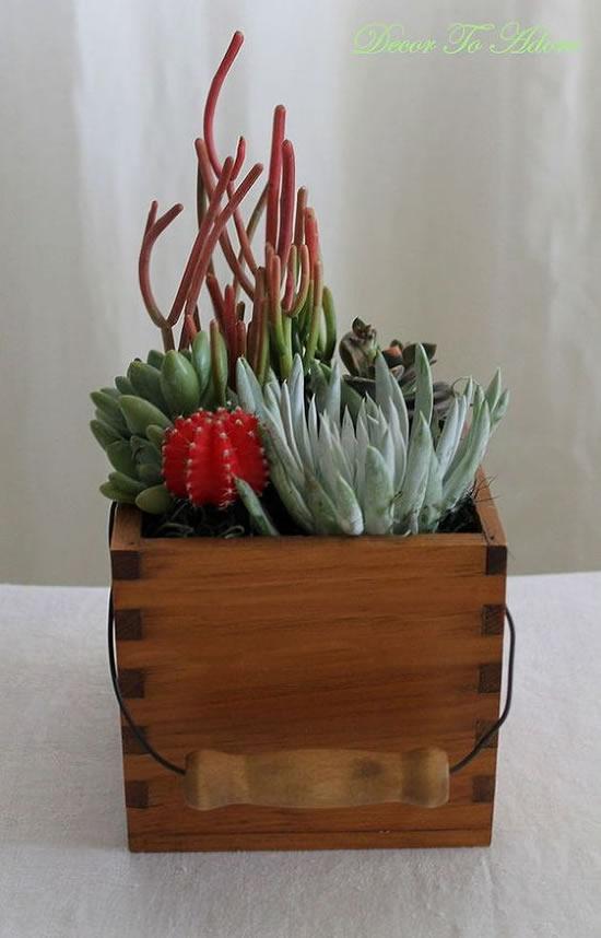Plante suculentas em caixas de madeira
