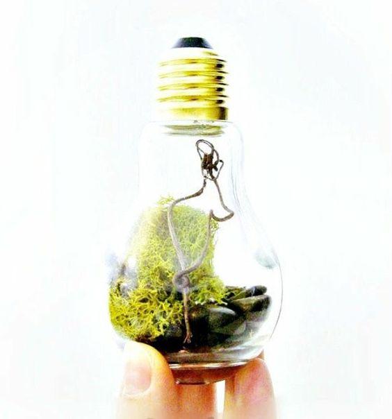Suculentas em lâmpadas