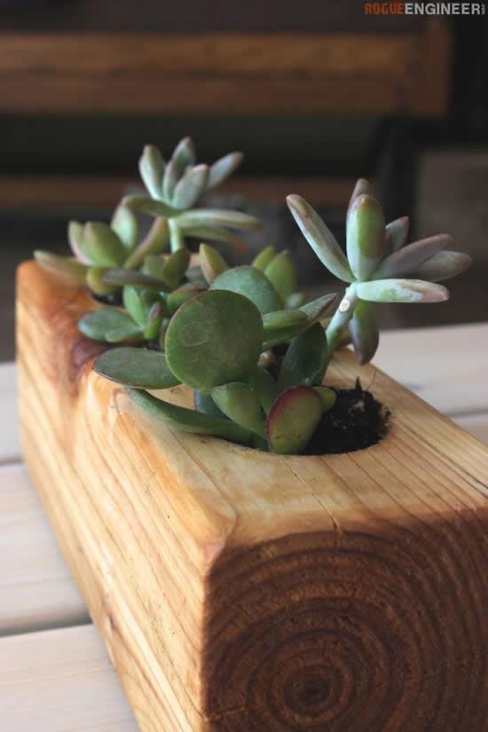 Ideia com suculentas em vasos de madeira